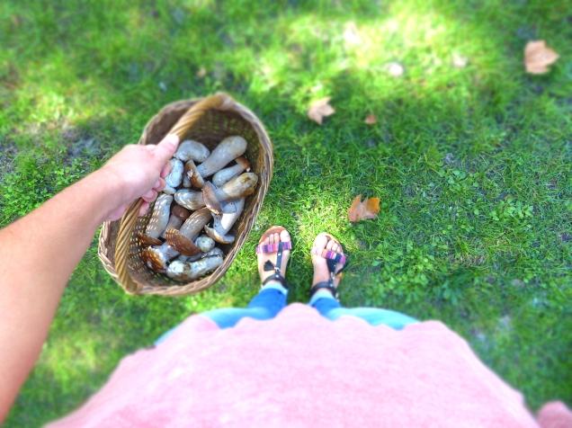 champignons-j-boissiere-office-de-tourisme-dares-2016-2