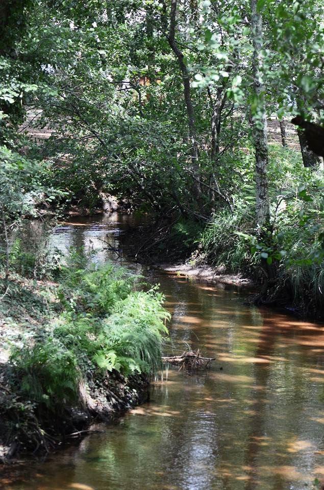 Bord de ruisseau à Arès