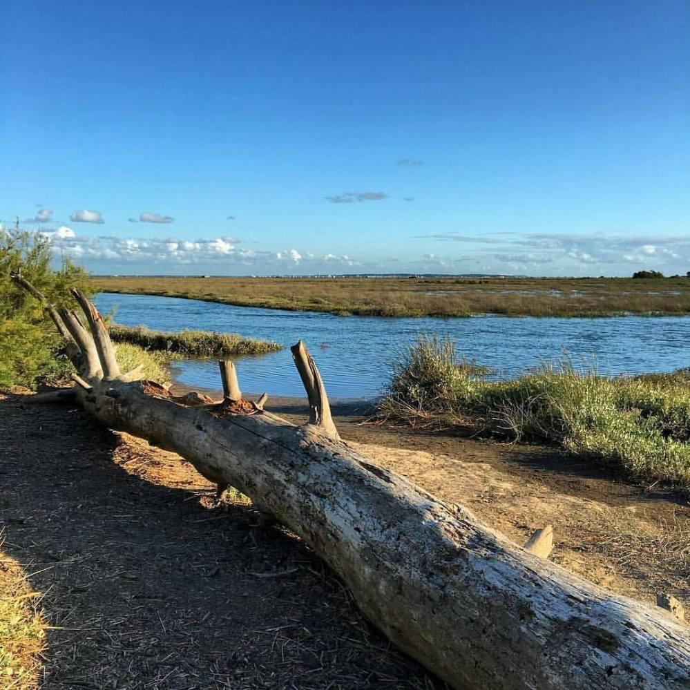 Réserve Naturelle des Prés Salés d'Arès - Bassin d'Arcachon