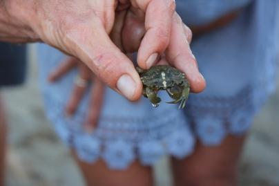 Crabe vert ©A.Cruchade