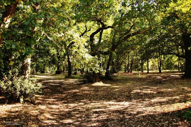 Balade dans le parc de la MGEN