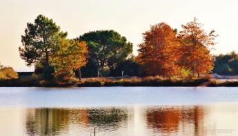 Couleurs automnales sur le lac de St Brice catherine