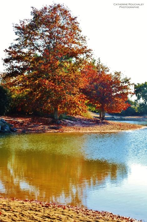Lac et couleurs automnales catherine