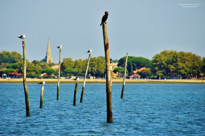 Les oiseaux perchés sur les pignots