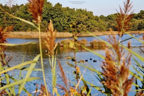 Roseau et lac catherine