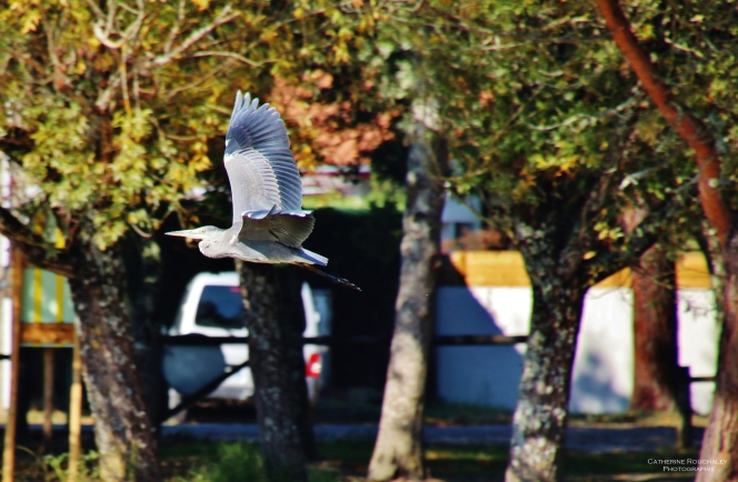 Vol d'un oiseau 2 catherine