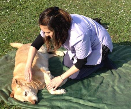 Liste de noël - massage canin ©Céline Desveaux